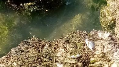 صورة في صيادة أزمة تلوث المياه تؤدي بحياة الاسماك