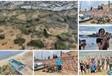 "Photo of 27 شبكة جمعياتية بالحمامات :""مع بعضنا ننظفوا بحرنا"""