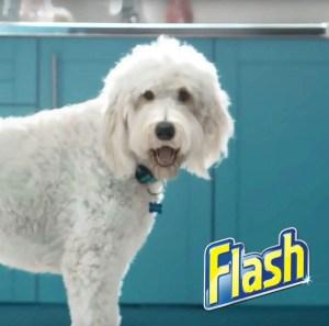 #Flashdog