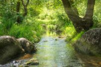 stream-tropical-forest-environment-sunny-landscape-48710225
