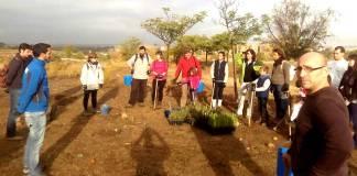Reforestación de los Cerros de Alcalá
