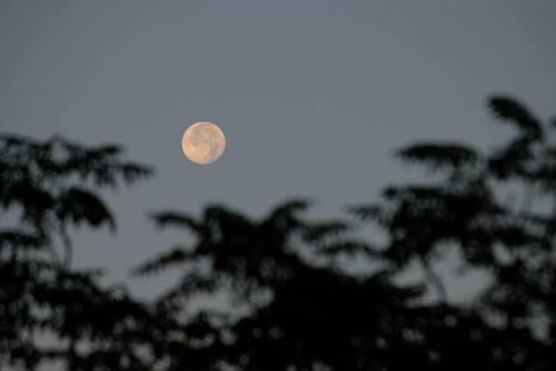 Luna lunera..