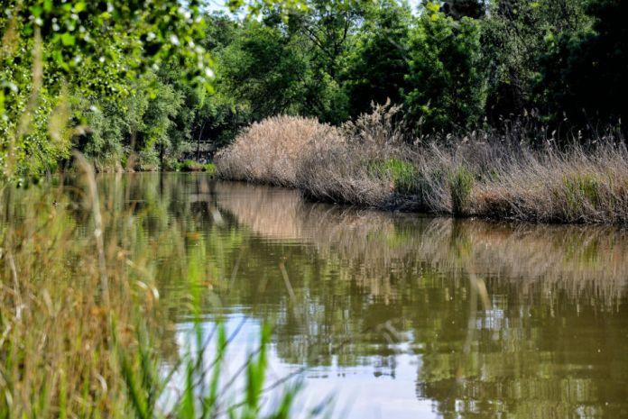 Primavera en el río Henares