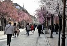 Los prunus de la calle Libreros ya anuncian la primavera