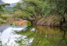 El rio Henares por primavera