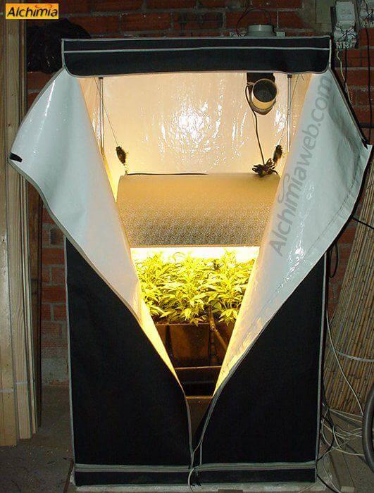 Cultivo de marihuana en armarios de cultivo  Blog del