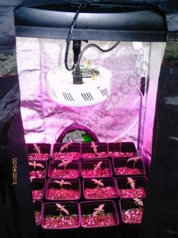 Cultivo Interior De Marihuana Blog Del Grow Shop Alchimia