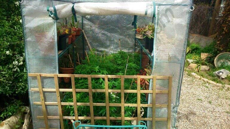 Autocultivo De Marihuana En Exterior Blog Del Grow Shop