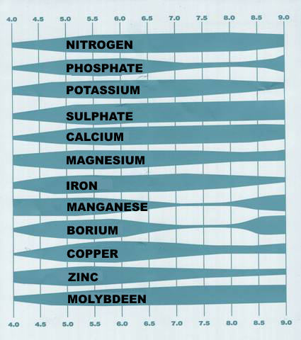 PH table and nutrient assimilation