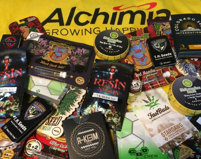 Selection of Autos, Fast-Version and Photo-dependant seeds