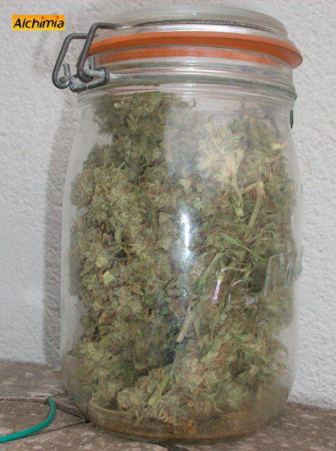 Comment Conserver Le Cannabis Blog Du Growshop Alchimia