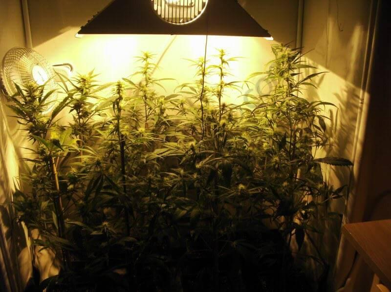 Comment Cultiver Cannabis En Laine De Roche Blog Du