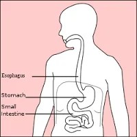 drinking and stomach cancer