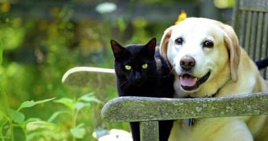 Barueri faz castração gratuita de cães e gatos
