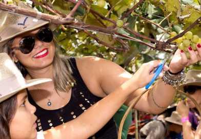 Pisa da Uva acontece até 04/02 nas vinícolas de São Roque