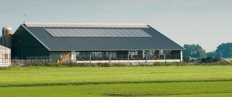 Meningkatkan Produktivitas Peternakan Ayam dengan Atap Kuat Alderon