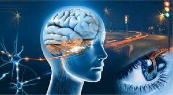 Por qué observamos con el cerebro