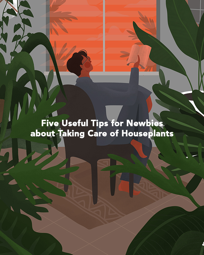 Five Useful Tips for Newbies about Taking Care of Houseplants