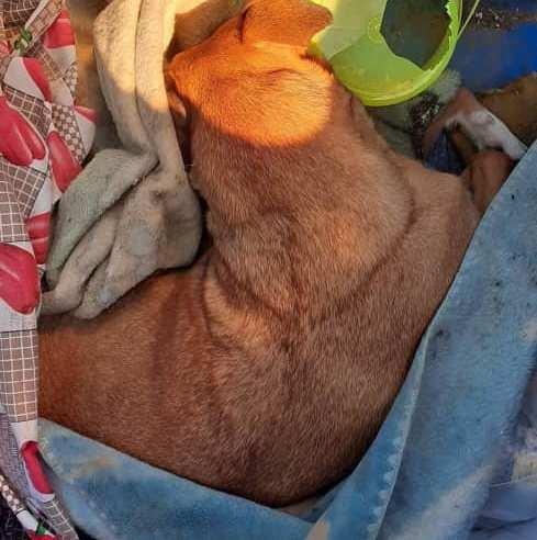 Falta de respeito: cão, morto, é descartado em contêiner de resíduos recicláveis