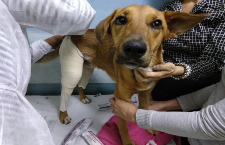 Três novos vereadores se identificam com a causa animal em Alegrete
