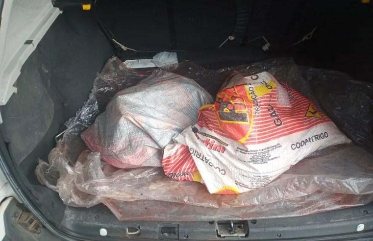 Corsa com ovelha carneada em seu interior foge da BM e motorista abandona o carro
