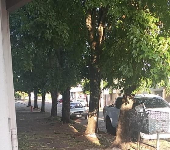 Quadra da 20 de Setembro fechada para abate de árvore