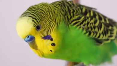 Photo of Budgie Diary: The World through the Eyes