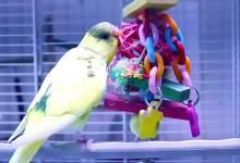 Photo of Diary of a Happy Budgerigar