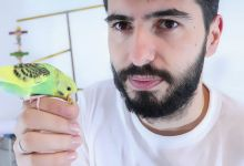 Photo of Budgie Bird Talking | HOW TO TALK?