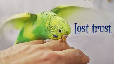 Photo of How To Lose Your Budgie's Trust?