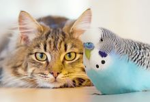 Photo of Can Cat and Budgie Live Together?