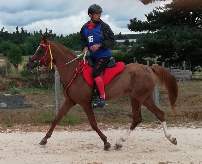 Égua PS Árabe Portuguesa em 5.º em França - Portal Equitação