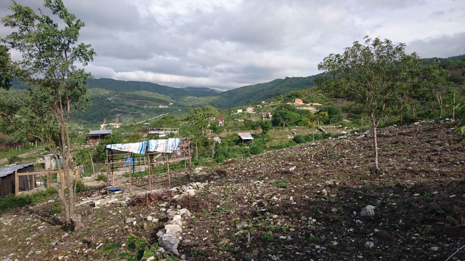 Recuperan 15 hectáreas en el Cañón del Sumidero