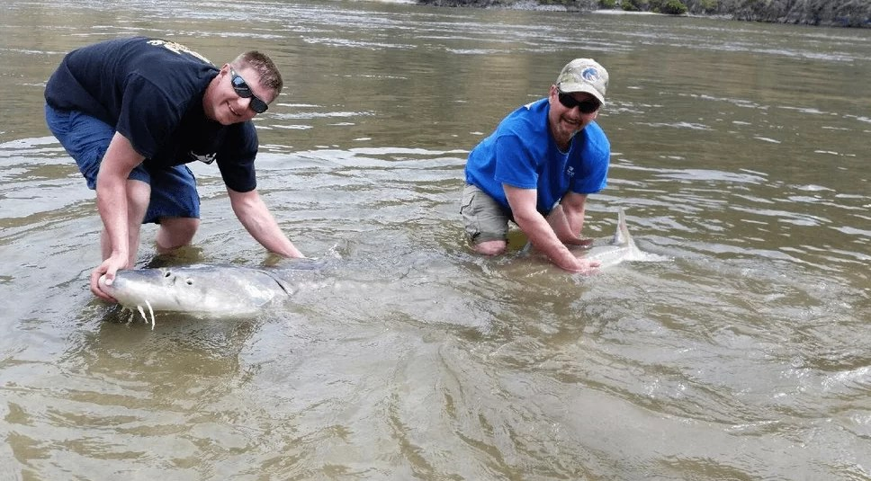 All You Need to know to Get Ready for Fishing in Clearwater River