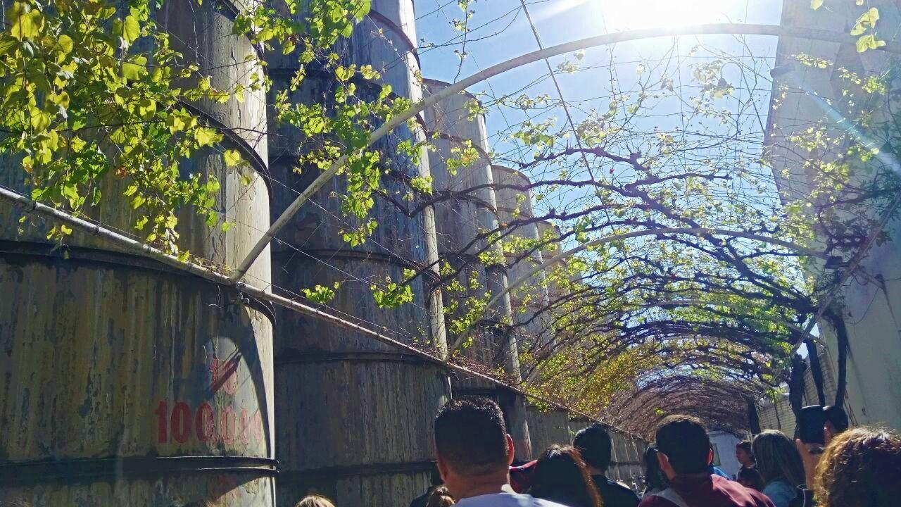 "Parras Coahuila ""The town of the vine""/ Parras Coahuila ""El pueblo del Vino"""