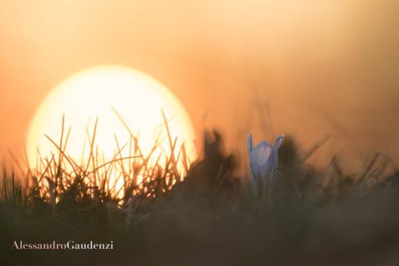 Croco al tramonto