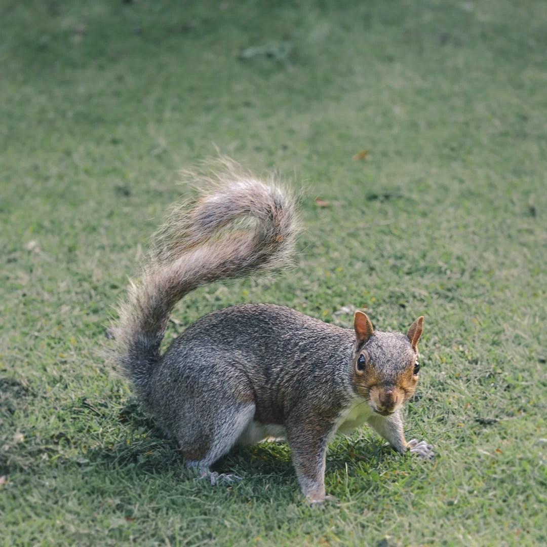 Scozia - Abitanti aggressivi al Princes Street Garden di Edimburgo