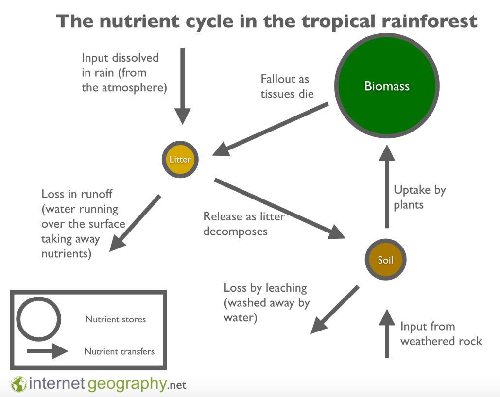 the carbon cycle diagram gcse wiring trailer south africa characteristics of tropical equatorial rainforest a