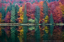 Autumnal trees reflecting in the waters of Frillensee, near Inzell/Adlgass, Bavaria, Germany. October 2008.