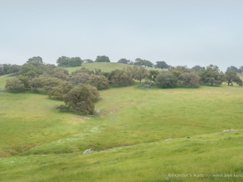 Oaks and pasture in fog, Santa Ysabel Open Space Preserve West, San Diego County, CA. April 2013.