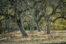 Three Oaks -- Sylvan Meadows, Wildomar, California