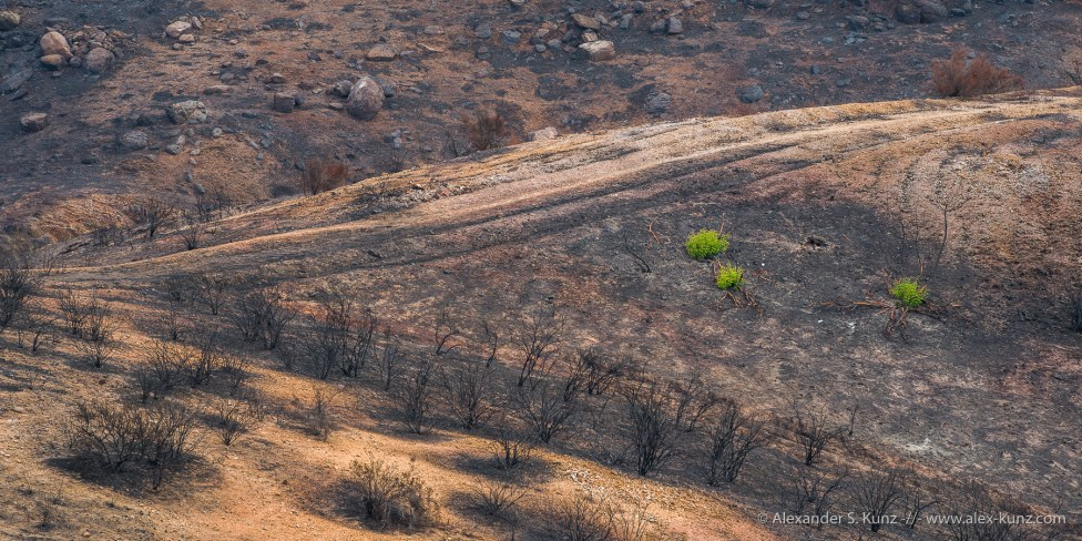 Landscape after the Bernardo Fire in May 2014, San Diego, California. July 2014.