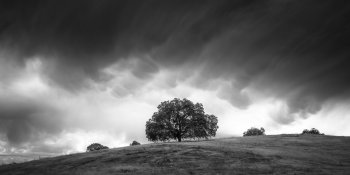 Live Oaks under mammatus storm clouds (wide) at Mesa Grande, Santa Ysabel, California. August 2014.