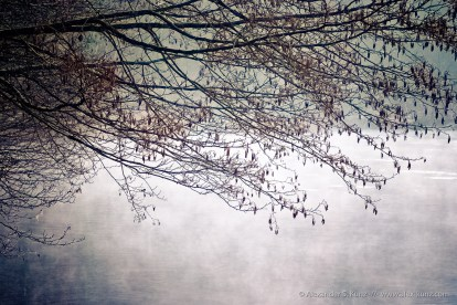 Lake & Twigs, Foggy Morning