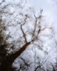Abstract reflection of a tree in the water at Huckinger See, Tarsdorf, Innviertel, Austria