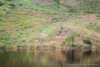 Lake Hodges Waterline in April 2011.