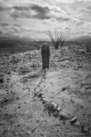 Barrel Cactus Mystery -- Canyon Sin Nombre, Ocotillo, California, United States