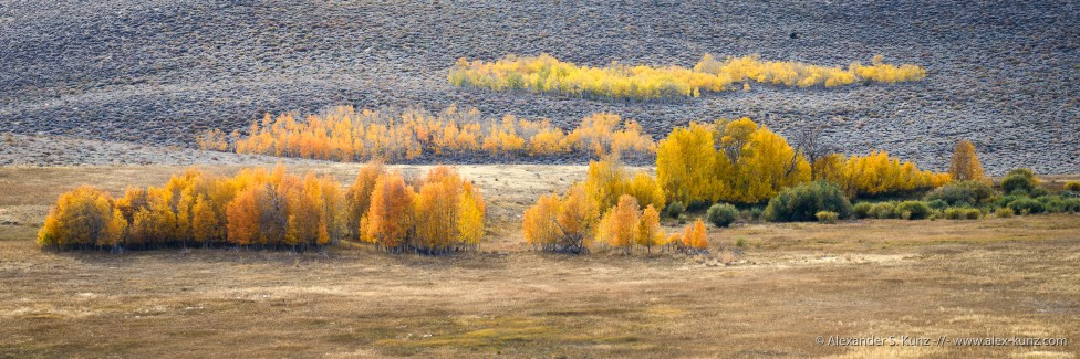 Aspen Meadow -- Conway Summit, Bridgeport, California, United States