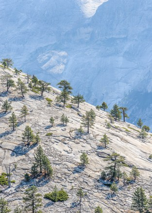 Trees growing out of the granite on Basket Dome, seen from North Dome, Yosemite National Park, California, August 2015.