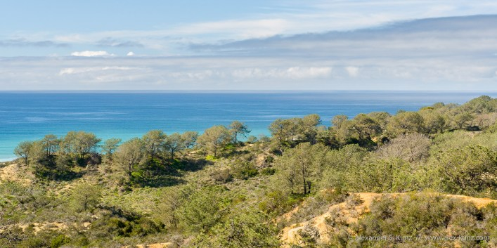 Blue ocean behind a ridge with green Torrey Pine trees at Torrey Pines Extension, Del Mar, California, February 2017.